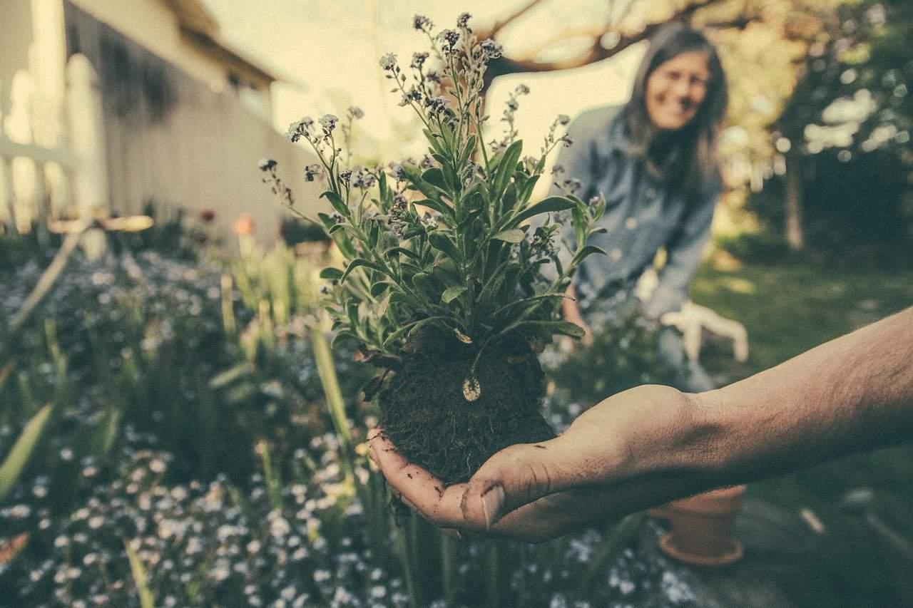 jardinier a domicile